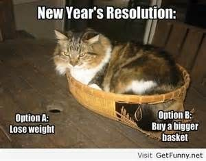 New Year's Resolution cat